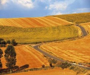 Puzle Paisagem de campos ondulantes