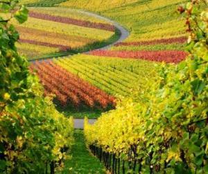 Puzle paisagem de outono na Vinha
