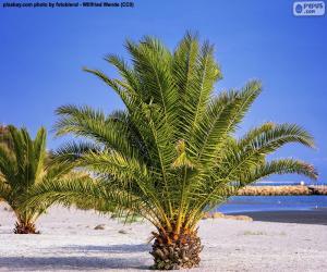 Puzle Palmeiras na praia