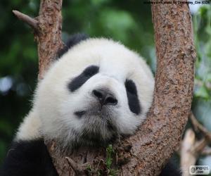 Puzle Panda dormindo