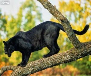 Puzle Pantera negra em um ramo de uma árvore