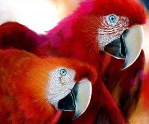 Puzle Par de papagaios