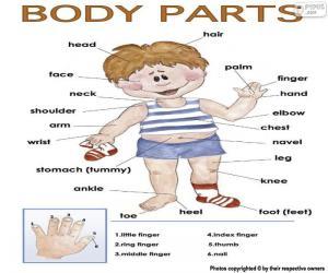 Puzle Partes do corpo em inglês