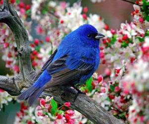 Puzle Pássaro azul