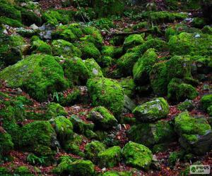 Puzle Pedras cobertas de musgo