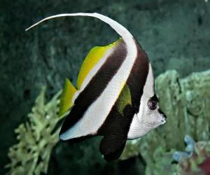 Puzle Peixe do coral