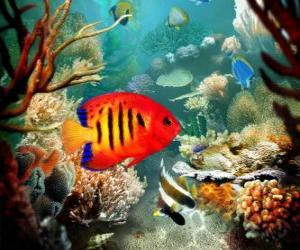 Puzle Peixe tropical