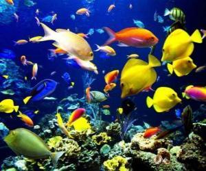 Puzle Peixes de diferentes espécies e tamanhos