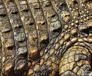 Puzle Pele de crocodilo