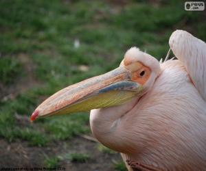 Puzle Pelicano rosa