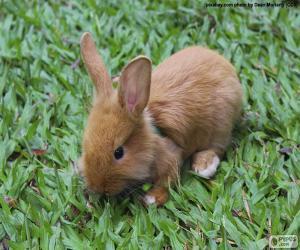 Puzle Pequeno coelho