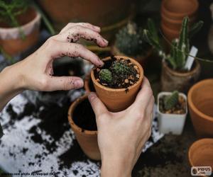 Puzle Plantar um cacto