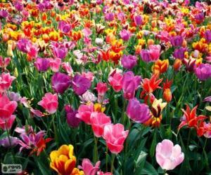 Puzle Primavera