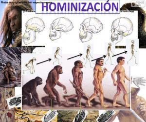 Puzle Processo de de homininização
