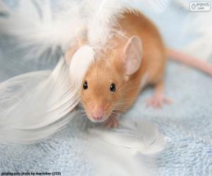 Puzle Rato e penas