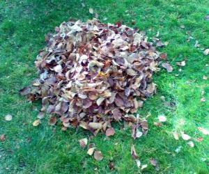 Puzle Recolhendo as folhas caídas