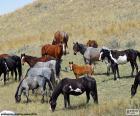 Manada de cavalos selvagens