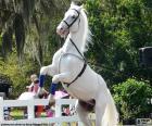 Cavalo branco elevado