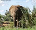 Elefante na floresta