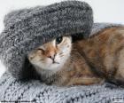 Gato e cachecol