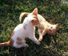 Gatinhos jogando