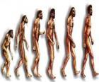 Sequência da evolução humana a partir do australopithecus Lucy para o homem moderno passando entre outros por homens de Heidelberg, Pequim, Neanderthal e Cromagnon