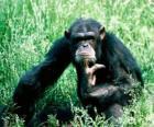 Macaco sentado no chão