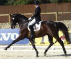Cavalo e cavaleiro que executam um exercício de adestramento