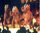 Elefantes treinados