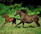 Cavalo e potro al  trote na pradaria