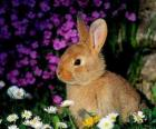 Coelho entre flores
