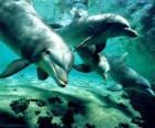 Grupo de delfins nadando no mar