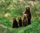 Família de urso