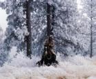 Cowboy ou vaqueiro que monta um cavalo