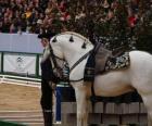 Elegante cavalo com ornamentos