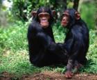 Dois macacos sentados no chão