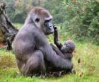Família de gorilas