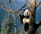 Panda na árvore