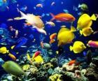 Peixes de diferentes espécies e tamanhos