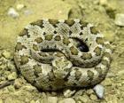 Serpente enrolada