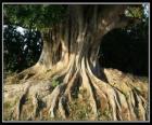 As raízes das árvores