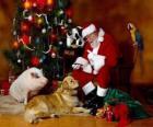 Papai Noel alimentação de alguns animais