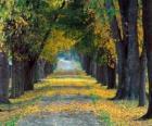 Caminho entre árvores