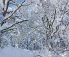 Após a queda de neve