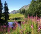 Um lago em primeiro plano e as flores de escritório de alta montanha