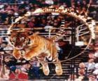 Tigre pulando dentro de um círculo de fogo