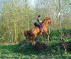 Curso técnico Equestre Concorrência, testa a compreensão entre cavalo e cavaleiro através de vários testes.
