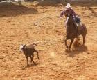 Cowboy ou vaqueiro que monta um cavalo e que trava uma cabeça de gado com o lasso