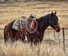 Cavalos de um vaqueiro
