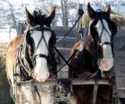 Dois cavalos puxando uma carroça